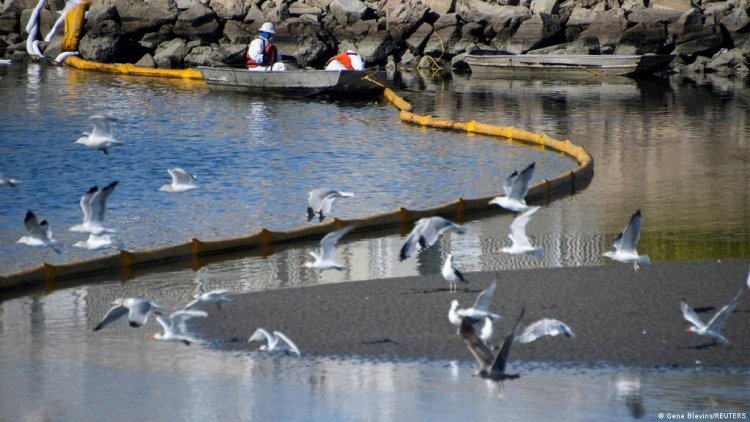 California, Ecological Disaster After Oil Spill